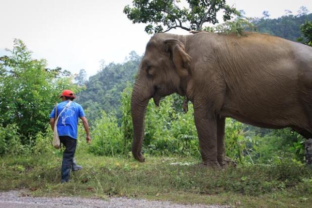 elephant trompe en bas cheap symbolique de llphant dans elephant with elephant trompe en bas. Black Bedroom Furniture Sets. Home Design Ideas